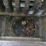 drain-before1-300x224